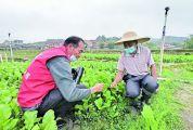科技下乡助菜农防害虫