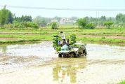 怀集水稻耕种收综合机械化水平提高 铁牛大显身手 助力春耕春种