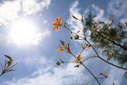 又到砚阳湖繁花盛放的季节!这里的花儿你都认得几种?