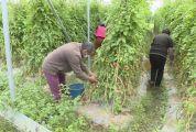 (抖音)德慶:千方百計幫助解決農產品滯銷難題