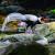 鼎湖山白鹇鸟频频出来溜达,广东省运吉祥物真身长啥样?带您去看