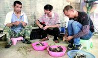 德慶鳳村菌菇種植基地助力脫貧