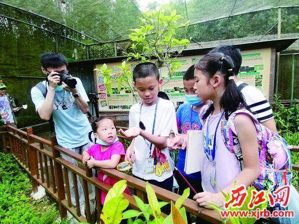 小朋友在活动中观察蝴蝶。 西江日报通讯员 叶子 摄