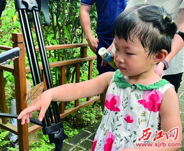 一只枯葉蛺蝶停在小朋友手上。西江日報記者 甘婉怡 攝