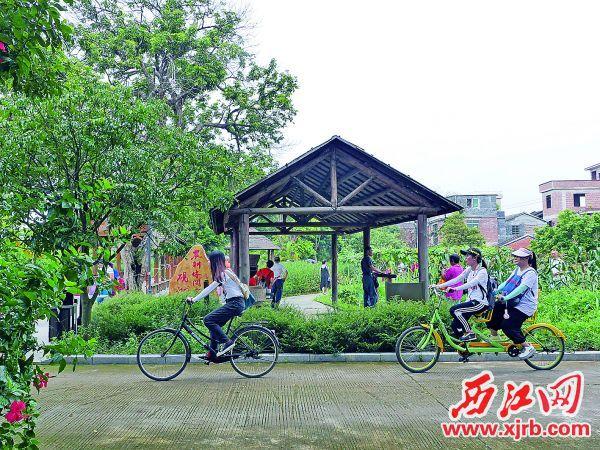硯洲島恢復了疫情前的熱鬧。圖為硯洲島農耕公園吸引眾多游客。 西江日報記者 吳威豪 攝