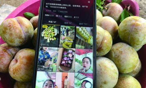 """封开麒麟李上市了 """"95后""""果农""""花式带货""""拓展销路"""