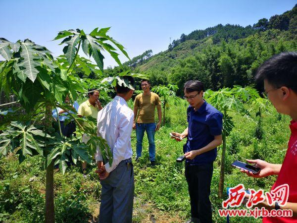 广东腾宇建设工程有限公司深入了解三合村发展状况及贫困情况,结合实际,投入社会资金共建木瓜种植示范园。 受访企业供图