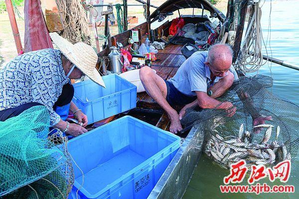 開漁首日,漁民收獲頗豐。 西江日報記者 吳勇強 攝