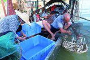 西江水域开渔首日记者随船探访:渔业资源保护好 渔民收获年年增