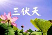 """冬病夏治正當時!鼎湖區中醫院""""三伏天灸""""來了!"""