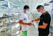 养殖种鸽孵出了一条财富路——封开青年吴松文立足山乡创大业