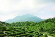 飲一壺秀水青山——大稠頂的秀麗山水和懷集茶文化