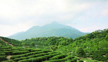 饮一壶秀水青山——大稠顶的秀丽山水和怀集茶文化