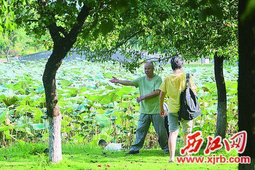 在牌坊公园,有老人在草地上锻炼。