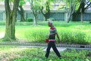 记者在端州城区公园采访发现 青草被身体锻炼者践踏