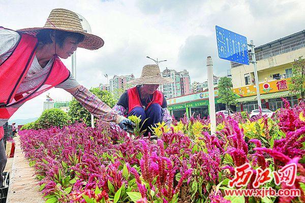 美丽花卉扮靓道路。 西江日报记者 曹笑 摄