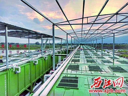 80套集装箱养殖设备建成投苗。 西江日报通讯员 王焌鑫 摄