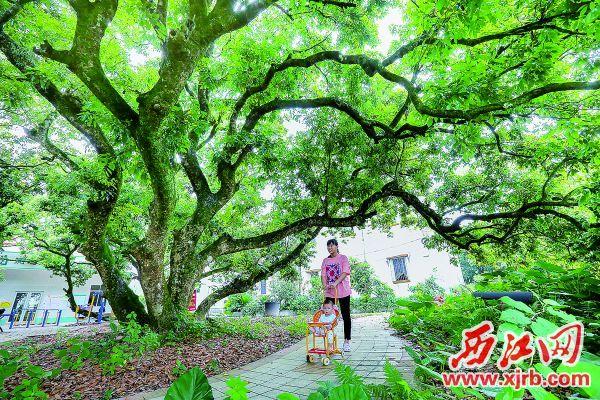 德庆官圩镇实现生产生活与自然生态相融合,推进建设美 丽乡村。 西江日报记者 梁小明 摄