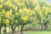 "nba虎扑篮球:""黄金绿道""正式上线,竟然这样美!"