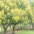 """肇慶""""黃金綠道""""正式上線,竟然這樣美!"""