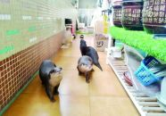 端州警方查获野生动物活体12只