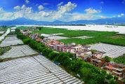 肇庆大力实施乡村振兴战略加快推进农业农村高质量发展
