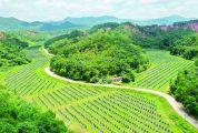 德庆深入实施乡村振兴战略 全面激发农业农村发展活力