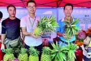 怀集县举办2020年中国农民丰收节庆祝活动 丰收节里庆丰收 乡村振兴结硕果