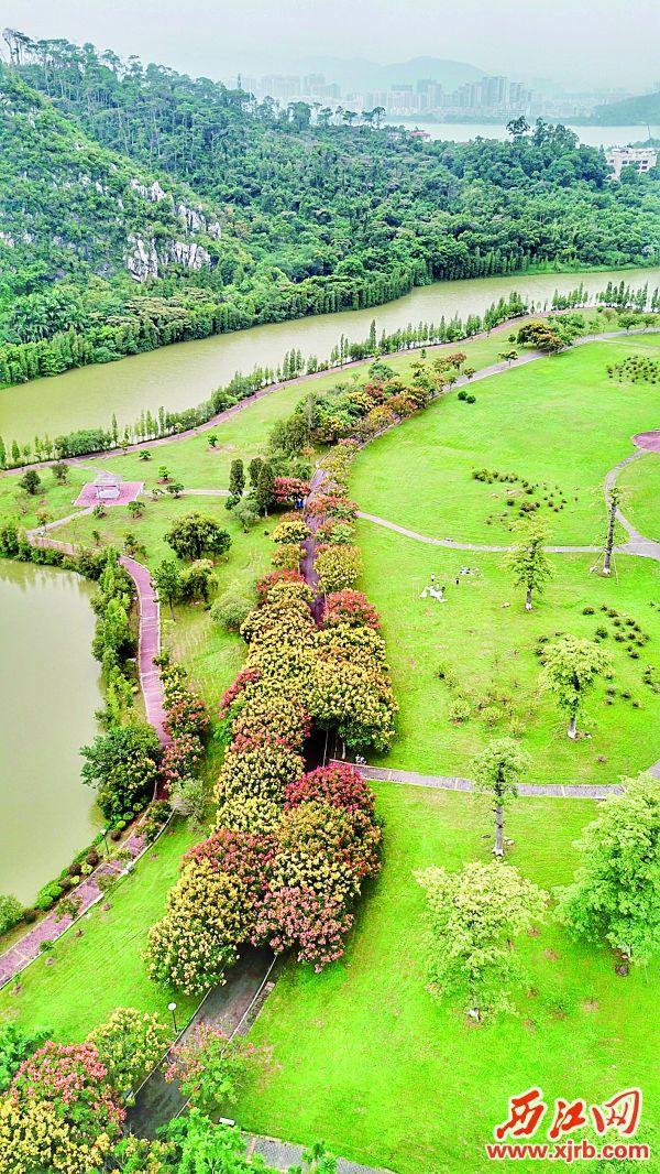 在七星岩景区北门,绿道两旁的树木,有的开出了花儿,有的叶子变了色,从空中俯视,宛如一条 彩带,系在星湖旁边。