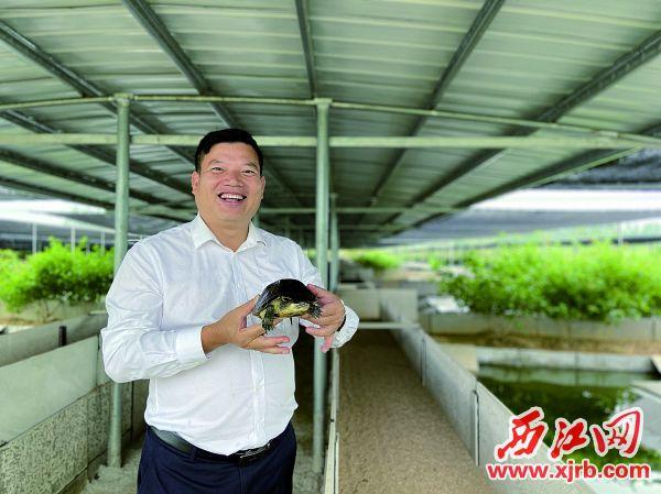 养殖的龟鳖是伦文龙的宝贝。西江日报记者 赖小琴 摄