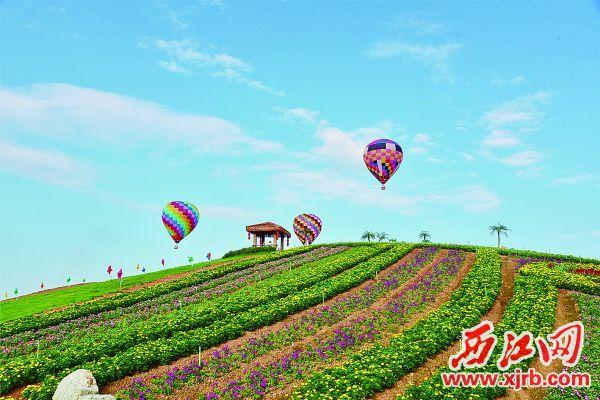 肇庆怀集华辰玫瑰园鲜花盛开。 肇庆市旅发委供图