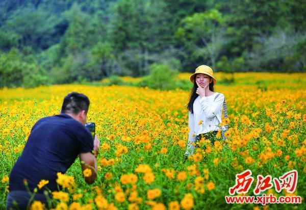 寻源谷花海留出拍照通道,便于市民游客留影。 西江日报记者 曹笑 摄