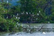 生态环境好,处处闻啼鸟!肇庆最新鸟类记录多达266种