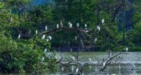 生态环境好,处处闻啼鸟!注册送68体验金最新鸟类记录多达266种