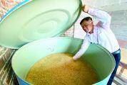 """晚造面积126.85万亩,预计总产量56.89万吨,比增0.55% 肇庆市秋粮丰收""""米袋子""""无忧"""