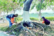 """保洁力度不减、绿化养护加强、坚持日常巡查 文明创建常态化 """"公园之城""""葆亮色"""