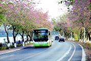 肇庆市公共汽车有限公司积极参与文明创建 让公交车成为文明城市流动风景线
