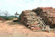 封开县今年发放62笔1.38亿元林权抵押贷款 金融活水涌动 浇灌山区林业