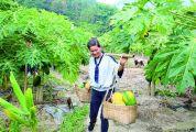 高要区乐城镇发展特色农业助推全域旅游示范区创建 一药一菜一果 富民兴镇兴村