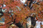 肇慶紅楓&梯田震撼上線!又仙又美的打卡點都給你標出來了!
