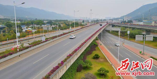 大沖樞紐立交橋兩側的勒杜鵑景觀帶 楊樂祺攝