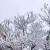 銀裝素裹美如畫!鼎湖山雞籠頂也驚現冰掛啦~