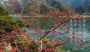 西江最是木棉多,红似火,艳如霞!