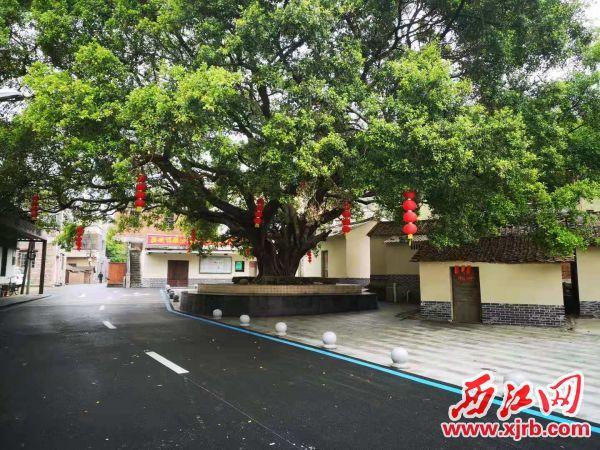 nba虎扑篮球:分界村的榕树广场。 记者 岑永龙 摄