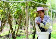 用农技发展特色农业