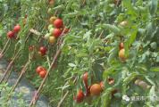 """""""一条龙""""服务助农增效又增收!带你看鼎湖这个山泉水蔬果种植科普示范基地"""