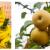 """西瓜、菠萝、""""牛奶梨""""……威尼斯人网站夏日摘果地图来了!周末必备→"""