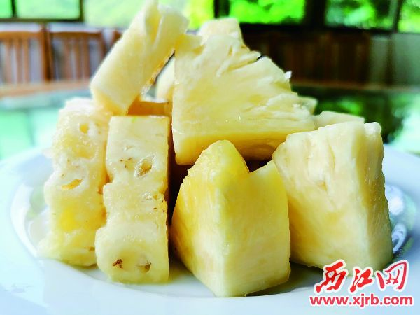 焦桂森种植的双马菠萝。 西江日报记者 杨丽娟 摄