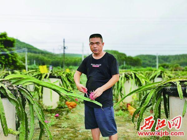汇龙农业基地负责人张满杰脸上洋溢着丰收的喜悦。西江日报记者 杨丽娟 摄