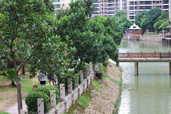 泰湖新城小区环境宜人。西江日报记者高静摄